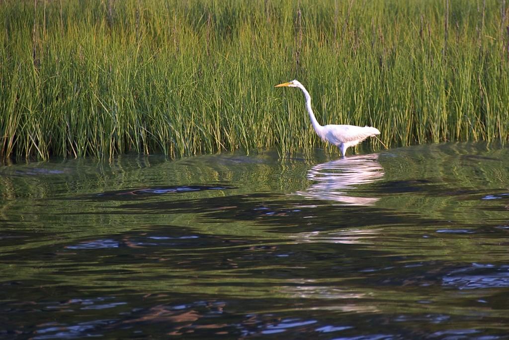 Bird-on-Chesapeake-Bay